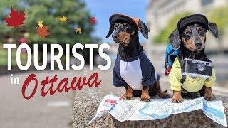 Ep #2: Crusoe & Oakley are TOURISTS in Ottawa!  (Cute & Funny Dog Travel Video)