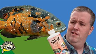 how-to-treat-ich-on-fish-tested-on-1000s-of-fish-