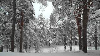 Relaxing nature scenes & chinese instrumental music - In The Forest In Winter Season [Part IV]