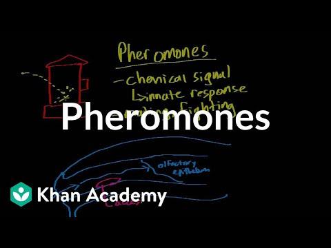 Pheromones | Processing the Environment | MCAT | Khan Academy
