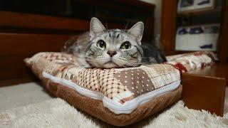 猫の嬉しいときのお返事 3 thumbnail