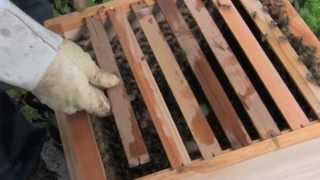 How to Install a Package into a Warre Hive