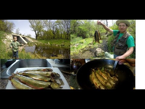 Catch and cook brook trout and edible mushrooms spring season Minnesota