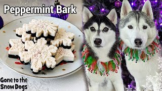 Download How to Make Peppermint Bark for Dogs 🎄 DIY Dog Treats 127 🎄 Christmas Dog Treats Mp3 and Videos