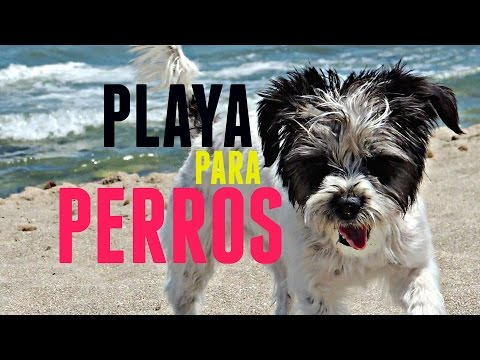 Dog Beach, Playa para Perros from YouTube · Duration:  3 minutes 49 seconds