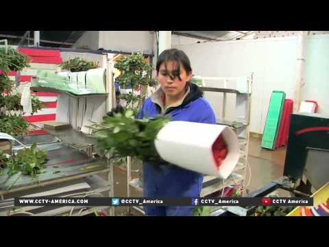 Colombia sends 500 million flowers to US for Valentine's Day