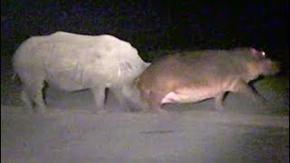 hippo-learns-lesson-from-rhinos