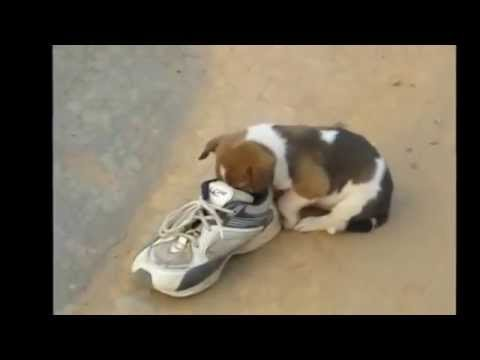 Hungry Slum Puppy runs for shoes