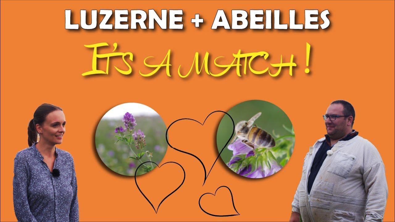 Apiculteur et luzerne : love story ?