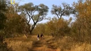 LOS ANIMALES MAS PELIGROSOS DEL MUNDO - 1 - AFRICA