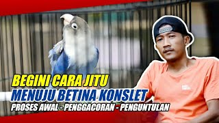 Download lagu part 2 Penjelasan! Proses Betina FAIGHTER sampai KONSLET