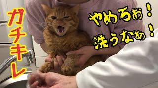 猫の手が臭すぎるので洗ったら鳴き叫んでしまった…