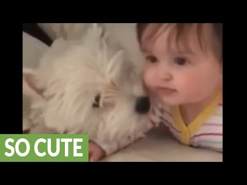 Westie puppy and baby share priceless moment