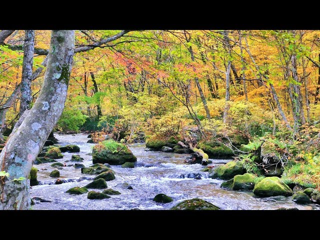 2018.10.26 [4K] 紅葉の奥入瀬渓流を歩く Oirase Stream_Autumn leaves_Walking
