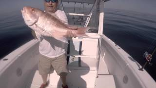 ARS (American Red Snapper) Fishing Gulf of Mexico 2015