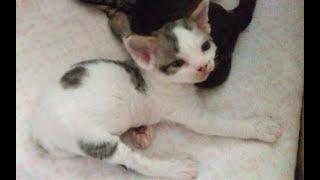 ✅ Профилактика глистов у котят и кошек
