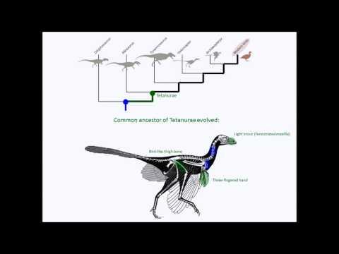 Evolutie: van dinosaurussen naar vogels