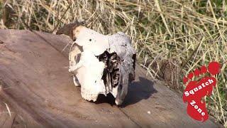 Skulls!! Kings River
