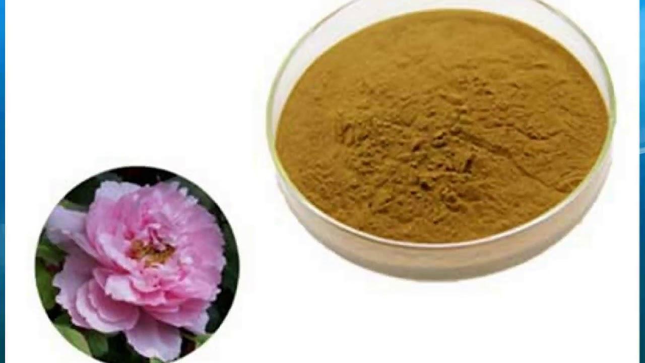 Hibiscus Flower Extract Supplierwholesalebulkfactory Youtube