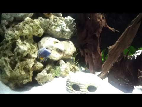 500L Malawi Cichlid Aquarium