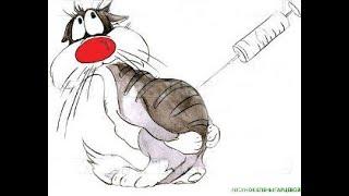 Все  о  вакцинации  домашних  животных
