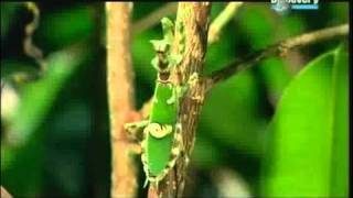 Das Alien Insekt Die Gottesanbeterin Part 1