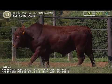 LOTE 046