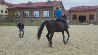Обучение верховой езде (тренировка)