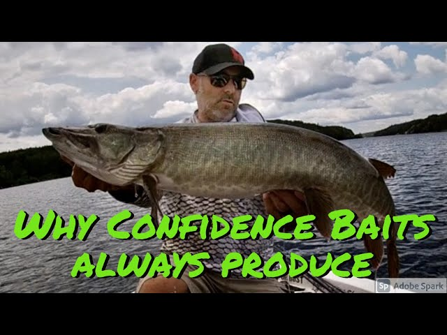 Part II of Musky fishing on the moon phases & confidence baits