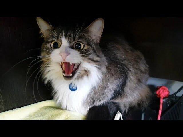 """Сюрприз вылупился! И всех котят разобрали! Мурлок делает """"пхххш!"""""""