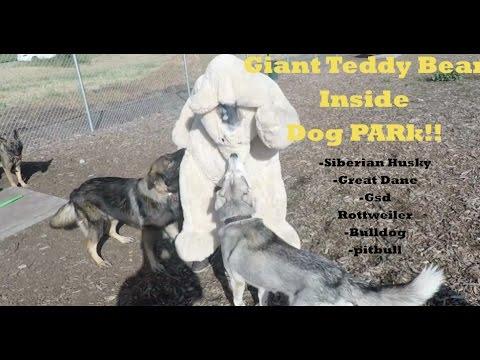 Giant Teddy Bear Prank FAIL! Husky & GSD ATTACK!!