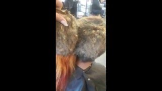 Hairstylist Shows Danger Of Leaving Weave In For Almost A Year