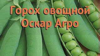 горох овощной Оскар Агро (oskar agro)  горох Оскар Агро обзор: как сажать семена гороха Оскар Агро