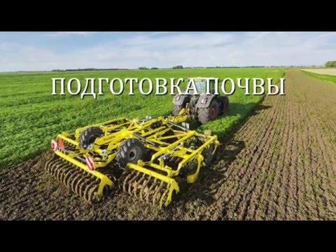 Томат в открытом грунте: характеристика культуры и технология выращивания