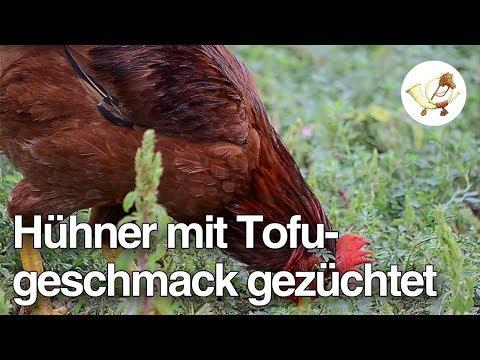 Gentechniker züchten Hühner mit Tofugeschmack [Postillon24]