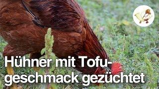 Gentechniker züchten Hühner mit besonderem Geschmack