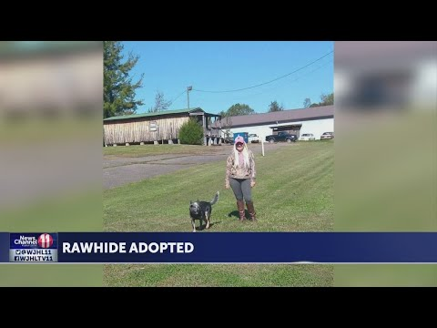 Rawhide Adopted From Hawkins County Humane Society