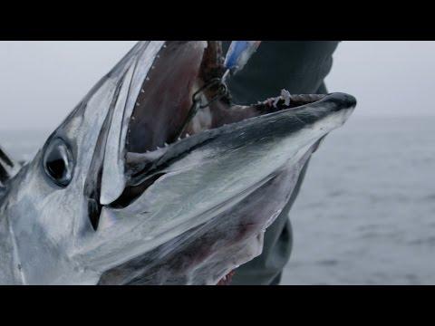 This Vicious Fish Attacked Survivors Of A Torpedoed British Naval Ship