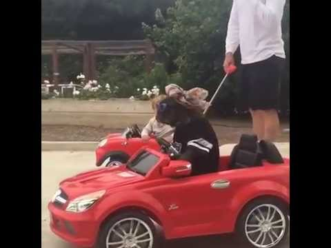 Dog driving electric car
