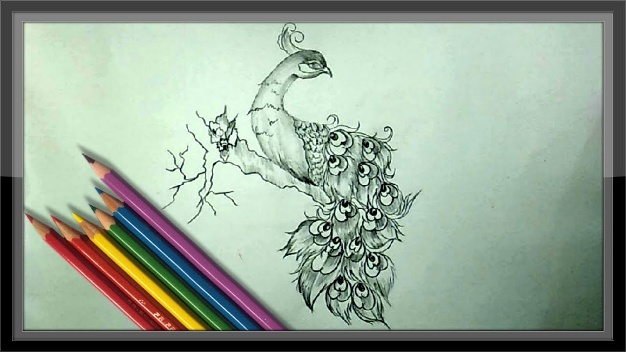 Cool easy drawings pencil drawing a beautiful peacock