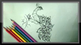 drawing peacock pencil drawings easy cool paintingvalley