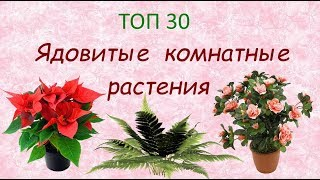 Ядовитые комнатные растения//ТОП 30 🌿