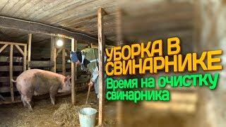 Уборка в свинарнике // Время на очистку свинарника  // Жизнь в деревне