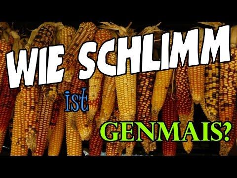 Gentechnik bei Lebensmitteln. Wie sich viele Menschen bei GENMAIS selbst belügen!