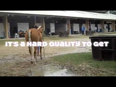 Perseverance Video At CFHJA Horse Show