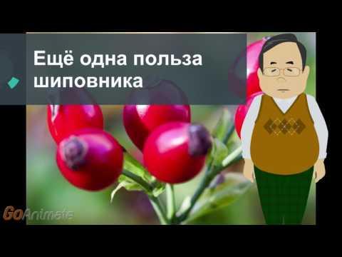 Калина полезные свойства и противопоказания Польза ягод