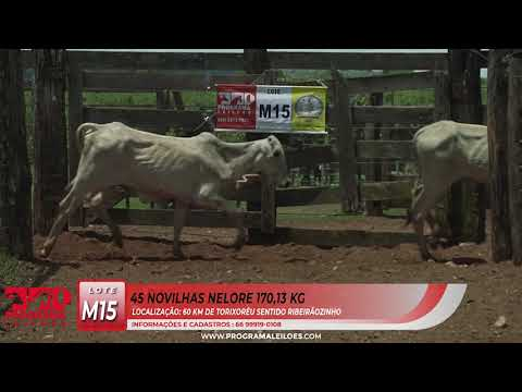 LOTE M15