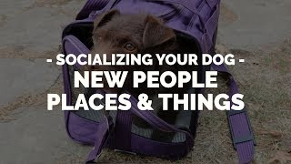How To Socialize Your Dog To New People, Places Or Things With Michael Ellis