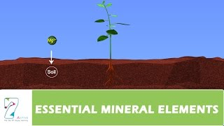 ESSENTIAL MINERAL ELEMENTS_PART 03