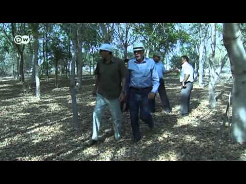 Egypt: The Amazing Forest in the Desert  - Global 3000    2013